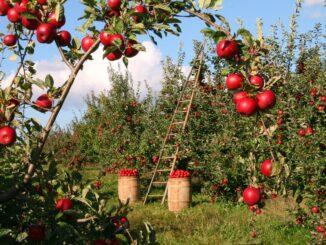 esenzione irap in agricoltura