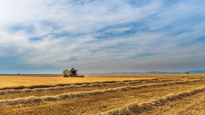 Chi è e cosa fa l'imprenditore agricolo